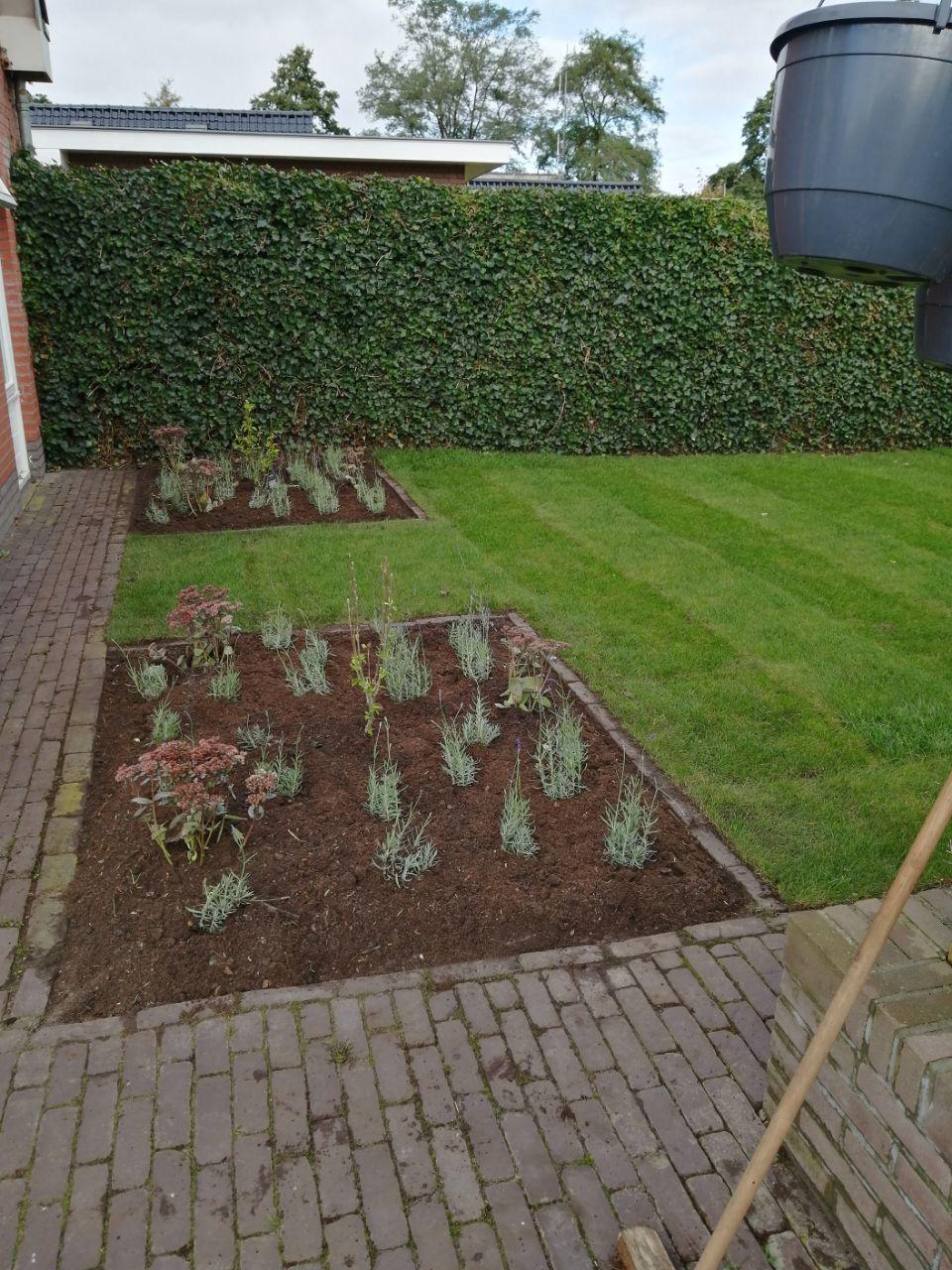 Tuinrenovatie - Asserstraat