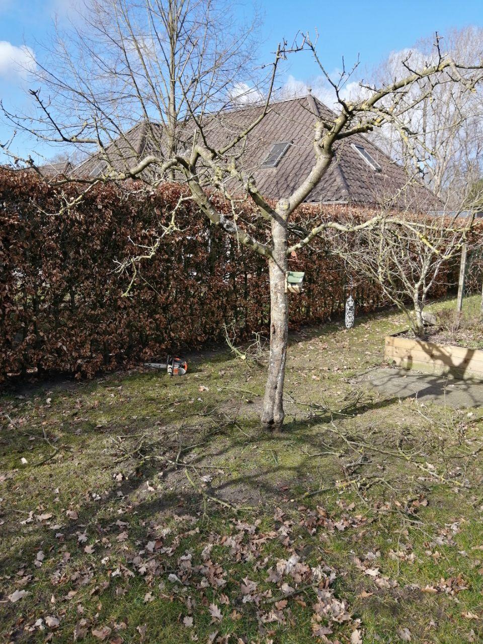 Voorjaarswerk, fruitbomen snoeien - Beilen